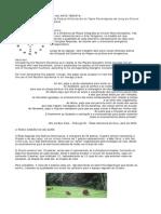 ART-AnaL-roda-xam-artt.pdf