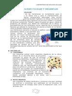 Labo 4.Permeabilidad Celular y Organelas