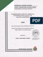 Fitorremediación de suelos contaminados por plomo