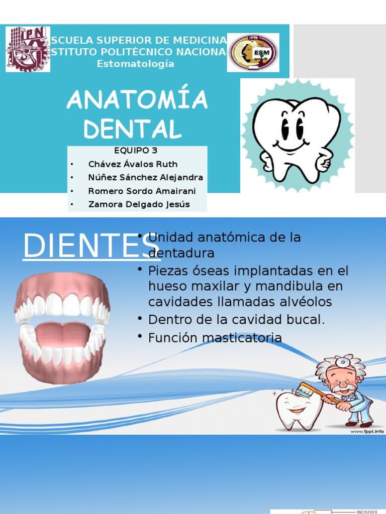 Eq 3 Anatomia Dental