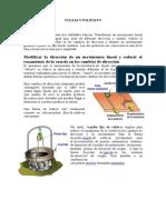 POLEAS Y POLIPASTO.docx
