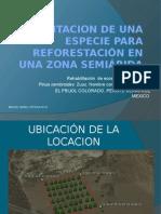Plantacion de Una Especie ( Frijol Colorado)