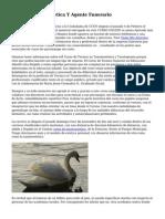Tecnico Tanatoestetica Y Agente Funerario