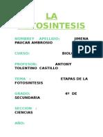 ETAPAS DE LA FOTOSINTESIS.docx