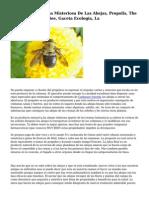 Propoleos La Resina Misteriosa De Las Abejas, Propolis, The Resin Mysterious Bee, Gaceta Ecologia, La