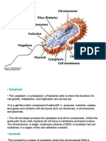 bacterial-cell-