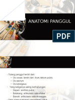 ANATOMI PANGGUL