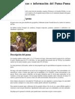 El Puma - Copia