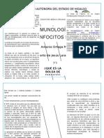 LINFOCITOS B-LARAHERNÃ-NDEZ-3°1