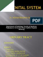 Kuliah Sistem Urogenital