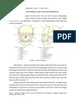 Perbedaan Tulang Tengkorak Laki (Tugas Dr Edi)