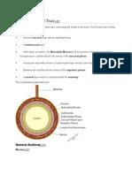 Anatomy of the GI Tract.docx