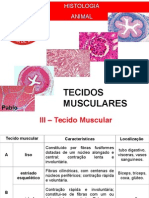 Histologia 03 MUSCULAR