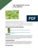 Definición de Adaptación en Los Animales y Las Plantas