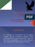 Anatomía Del Ave. Aparato Circulatorio. Sistema Cardiovascvular.