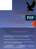 Anatomía Del Ave
