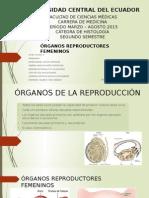 Histología órganos de la reproducción femeninos