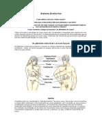 Sistema Endócrino