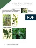 Plante in Lupta Biologica Contra Patogenilor-daunatorilor