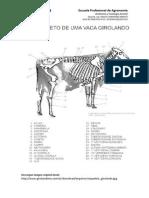 Anatomia Guia 02(1)