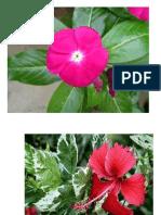 Flores Atividade 3