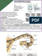 Introducción Embriología Cardiovascular