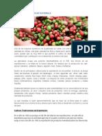 Principales Cultivos de Guatemala