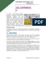 INFORME DE LOS CAPRINOS.docx