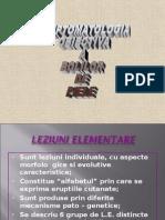 Leziuni elementare Dermatologie