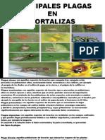PRINCIPALES PLAGAS HORTALIZAS TRABAJO - copia.pptx
