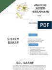 Anatomi Sistem Persarafan