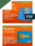 Anatomia Óssea Equinos e Ruminantes