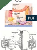 Anatomi Histo Colon
