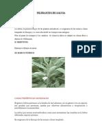 FILTRANTES DE SALVIA imprimir.docx