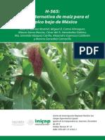 H-565 Maíz Trópico Mx nueva variedad de maíz para el bajio de México