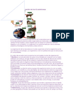 Niveles de Organización de Los Ecosistemas