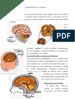 Sustrato Neurologico Del Lenguaje El Cerebro Organizacion y Funcion