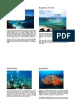 Potensi Kekayaan Laut Indonesia