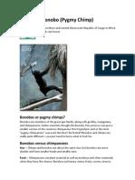 3b - DRC- Bonobo