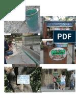Manila Zoo Photos