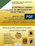 Osen Parasitosisentericascaninasyfelinas 121018110625 Phpapp02