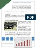 Bovino Angus- Producción Agroindustrial