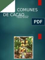 Cacao Usos