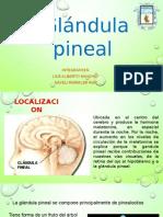 Glandula Pineal (1)
