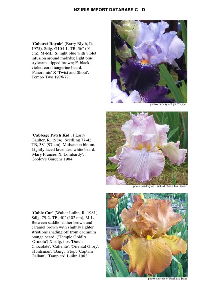 Nz Iris Import Database C D Yellow Color Clarette Wedges Cordelia Black