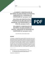 Aislamiento e Identificación de Bacterias Solubilizadoras de Fosfatos, Hanitantes de La Rizósfera de Chontaduro