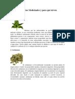 10 Plantas Medicinales y Para Qué Sirven
