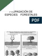 Propagación de Especies Forestales