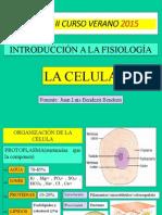 Celula, transporte menbrana