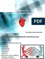 Generalidades sistema cardiovascular